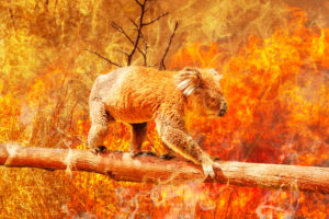 Bush Fire Shutters Essential with Climate Change